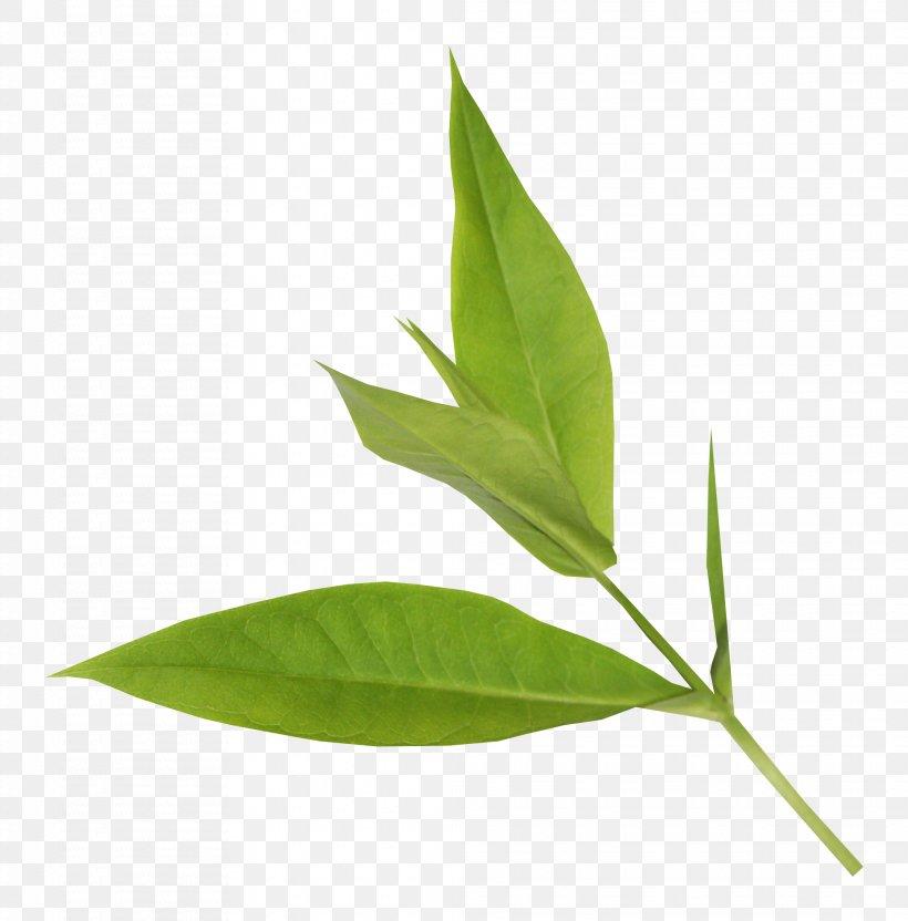 Leaf Plant Stem Plants Greens Food, PNG, 2024x2054px, Leaf, Bay Leaf, Botany, Flower, Flowering Plant Download Free