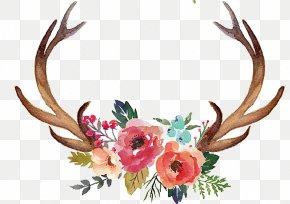 Hand Painted Antlers - Deer Antler Flower Moose Clip Art PNG