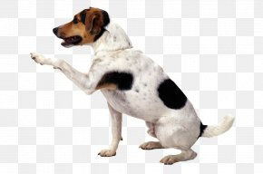 Dogs - Jack Russell Terrier Puppy Pet Sitting Cat PNG