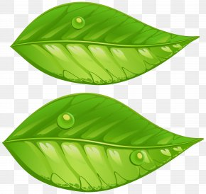 Green Leaves Transparent Clip Art Image - Leaf Green Clip Art PNG