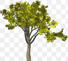 Leaf - Twig Branch Leaf Tree Image PNG