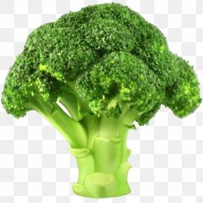 A Broccoli - Broccoli Slaw Vegetable Clip Art PNG