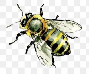 Honey Bee - Western Honey Bee Hornet Insect Worker Bee PNG