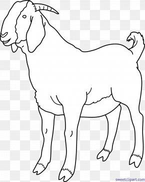 Meerkat Border - Clip Art Boer Goat Black Bengal Goat Image Russian White Goat PNG