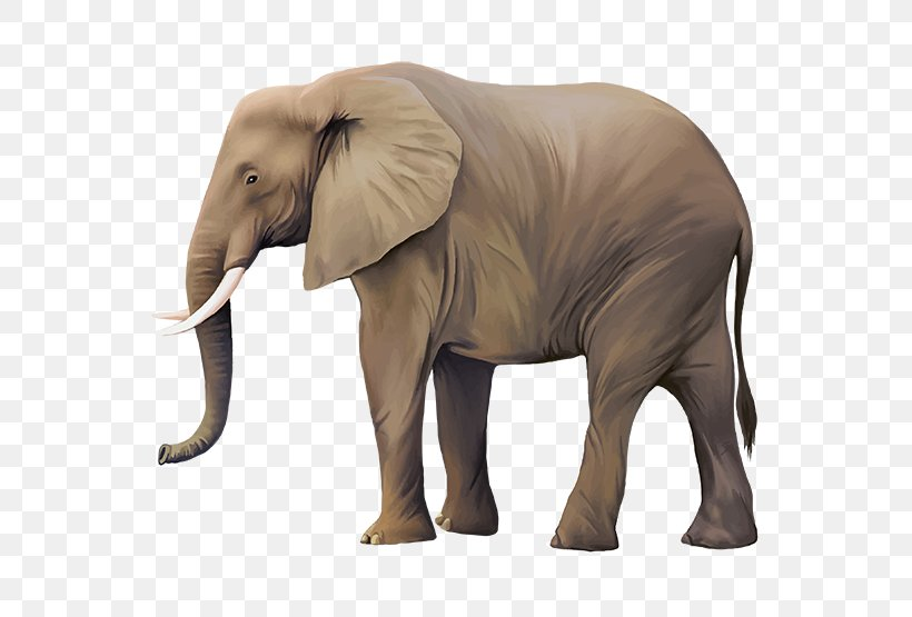 Asian Elephant Clip Art, PNG, 555x555px, Asian Elephant ...