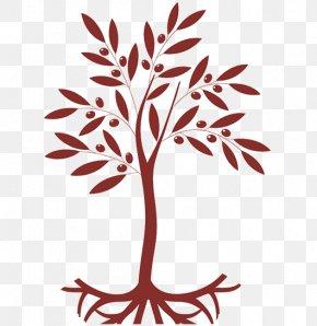 Olive - Twig Olive Leaf Tree Plant Stem PNG