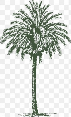 Free Palm Tree Vector - Arecaceae Date Palm Art Clip Art PNG