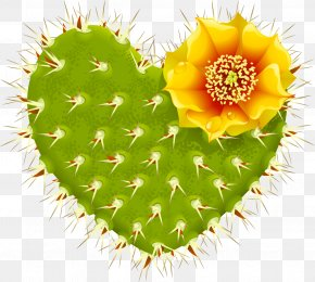Cactus Plant - Cactaceae Heart Barbary Fig Thorns, Spines, And Prickles PNG