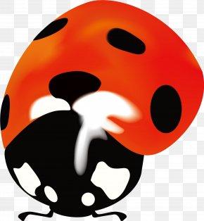 Orange Simple Ladybug - Snout Lady Bird Clip Art PNG