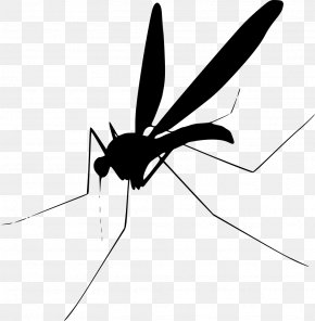 Mosquito - Mosquito Can Stock Photo Royalty-free Clip Art PNG