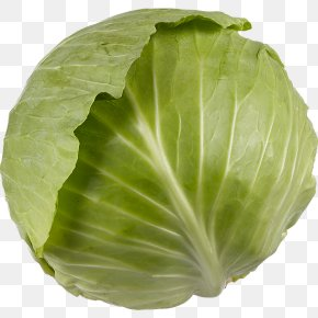 Broccoli - Romaine Lettuce Savoy Cabbage Collard Greens Spring Greens Capitata Group PNG