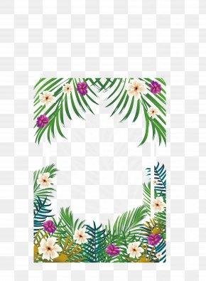 Tropical Borders - Tropics PNG