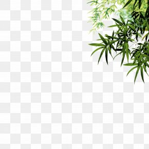 Green Bamboo Bamboo - Bamboo Leaf Ink Icon PNG