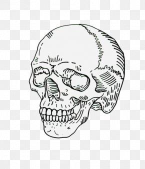 Rib Cage - Drawing Human Skull Symbolism Calavera Art PNG