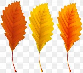 Autumn Leaves Clip Art Image - Autumn Leaf Color PNG