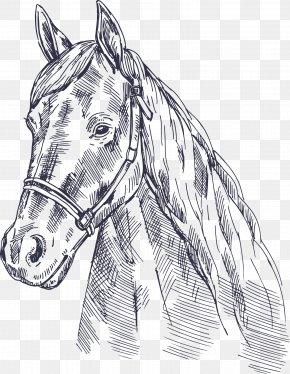 Vector Horse - Horse Euclidean Vector PNG