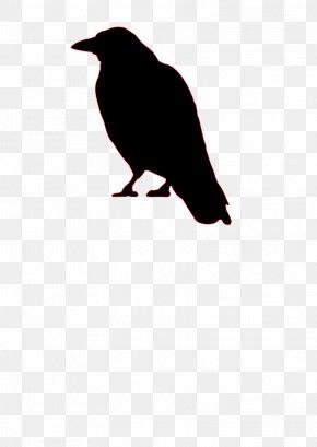 Bird - Bird Common Raven Crow Silhouette Clip Art PNG