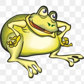 Frog - Toad True Frog Tree Frog Clip Art PNG