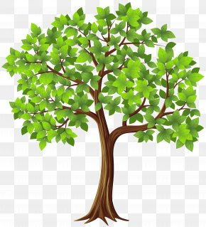 Transparent Tree Cliparts - Tree Clip Art PNG