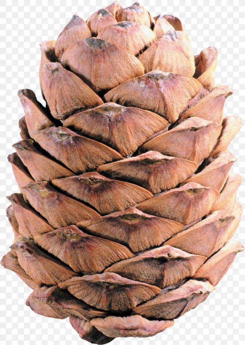 Conifer Cone Pine Clip Art, PNG, 1854x2612px, Conifer Cone, Cedar, Cone, Conifers, Material Download Free
