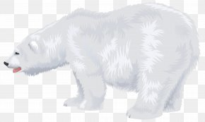 Polar White Bear - Polar Bear Fur Wildlife Snout PNG