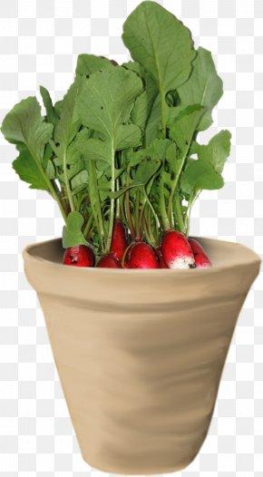 Carrot Plant - Spring Greens Chard Food Radish Herb PNG