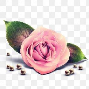 Rose - Rose Pink Clip Art PNG