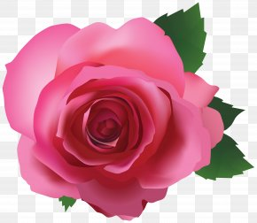 Pink Rose Transparent Image - IPhone 6S IPhone 7 IPhone 5s PNG