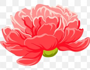 A Peony Flower - Moutan Peony Floral Design PNG