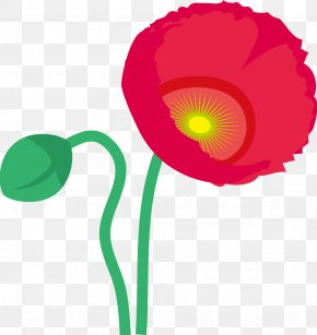 Poppy - Flowering Plant Petal PNG
