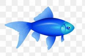 Blue Fish Image - Fish Clip Art PNG