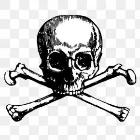 Skull - Skull And Bones Skull And Crossbones Tattoo Human Skull Symbolism PNG