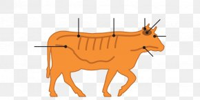 Nervous Cow Cliparts - Cattle Bovine Spongiform Encephalopathy Specified Risk Material Vertebral Column Spinal Cord PNG