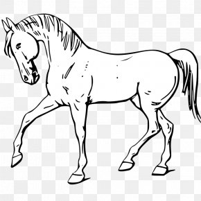 Animal Outline - Tennessee Walking Horse Drawing Clip Art PNG