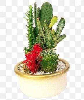 Potted Cactus - Flowerpot Prickly Pear Bonsai Cactaceae PNG