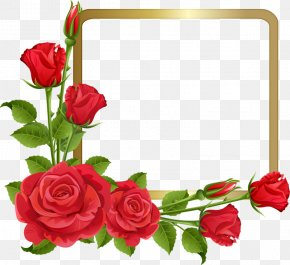 Rose - Borders And Frames Rose Clip Art Flower PNG