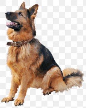 Dog Cartoon - Dog Collar Cat Shock Collar Dog Training PNG