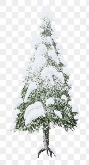Snow Trees - Christmas Tree Snow Clip Art PNG