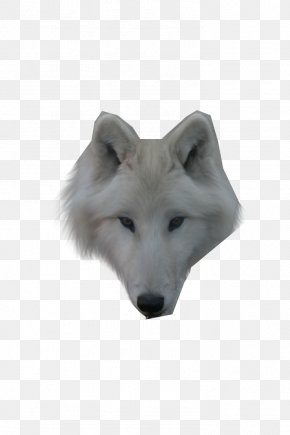 Wolf - Dog Arctic Wolf Alaskan Tundra Wolf Face PNG