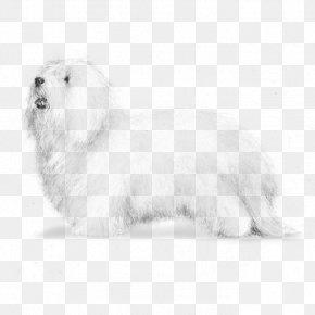 Puppy - Maltese Dog Coton De Tulear Havanese Dog Bolognese Dog Lhasa Apso PNG