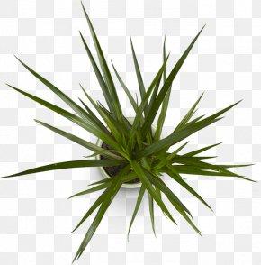 Plant Design - Succulent Plant Digital Marketing Business Web Design Company PNG