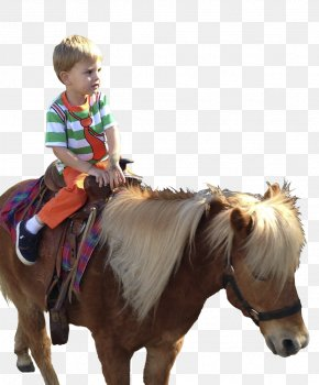 Horse - Pony Horse Rein Western Riding Bridle PNG