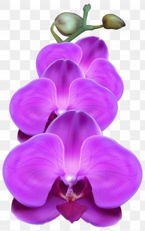 Purple Orchid Transparent Clip Art Image - Orchids Purple Clip Art PNG