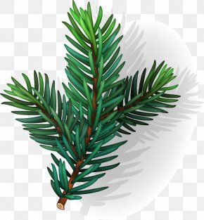 Hand-painted Conifer Leaf Pattern PNG