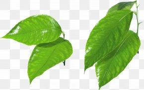 Green Leaf - Leaf Green Clip Art PNG