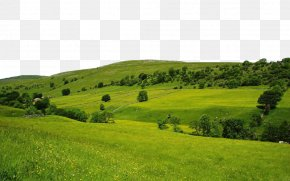 Nature Free Download - High-definition Television Nature 1080p Wallpaper PNG