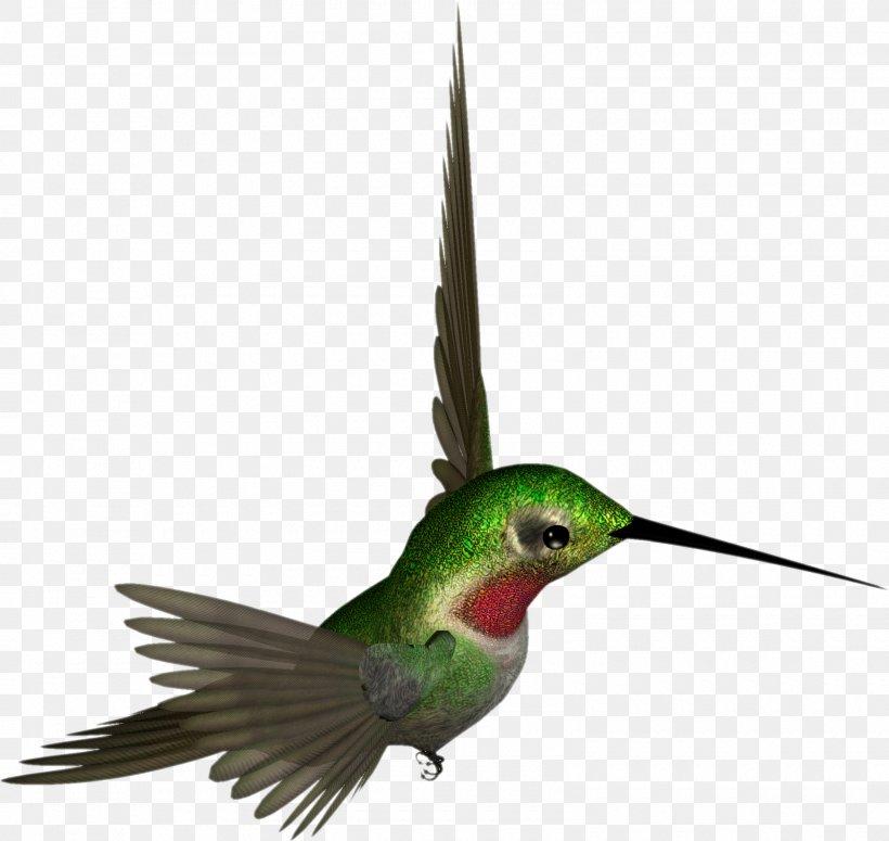 Hummingbird Beak Feather Wing Fauna, PNG, 1600x1513px, Hummingbird, Animal, Beak, Bird, Blog Download Free