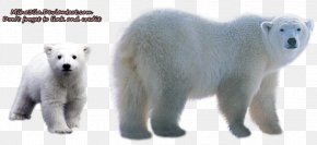 Polar Bear Transparent Background - Polar Bear Clip Art PNG