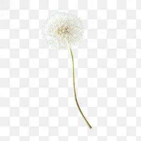 Dandelion Creative - Common Dandelion PNG