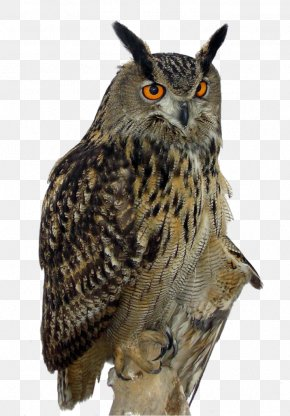 Owl - Owl High-definition Video Clip Art PNG